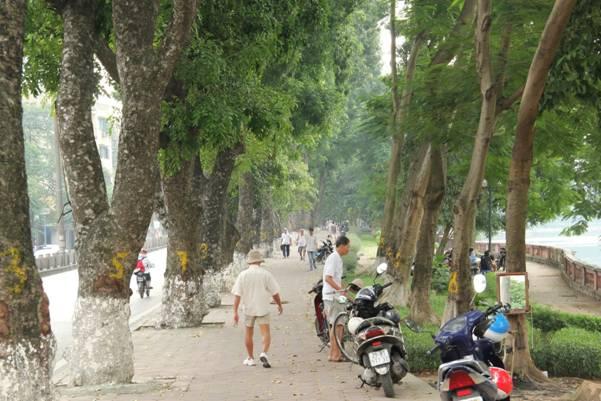 hàng cây trên phố kim mã
