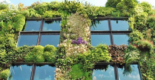 paris cho phép người dân làm vườn 1