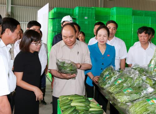 Thủ tướng thăm dự án đầu tư nông nghiệp ứng dụng công nghệ cao