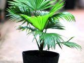 8 loại cây cảnh hút khí độc thường được chọn để trồng trong nhà