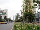 Đột phá về cảnh quan từ cây xanh đa tầng tán