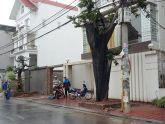 Hải An, Hải Phòng: Trồng cây chiếm luôn vỉa hè