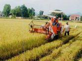 Quảng Bình: Chuyển đổi 550.000 m2 đất trồng lúa