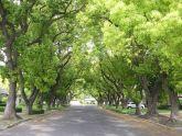 Quy hoạch khuôn viên cây xanh trong đô thị: Cần có tầm nhìn lâu dài