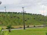 """Thái Bình: Lạ kỳ công trình """"núi mọc trên ruộng"""""""
