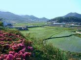Xây dựng nông thôn mới - kinh nghiệm của một số nước châu Á